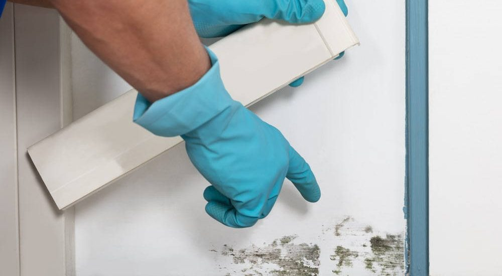 Mold Testing in Springfield